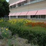 Renovatie gazon voor ziekenhuis 07