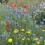 Beplanting bloemenweide