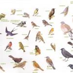 Vogels in een ecologische tuin.
