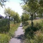 GWW inzaaien en planten woonwijk