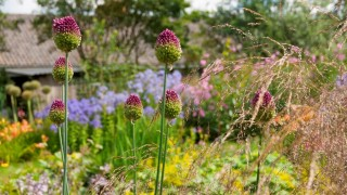 Landschappelijke tuin te Ouderkerk aan den IJssel