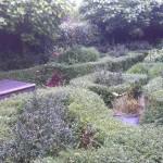 Aanwezige haagjes in tuin.