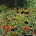 Eenjarigen toegepast in tuin te Aarlanderveen.