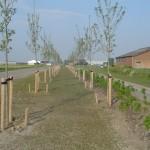Woonklaar maken aanleg wegbeplantingen